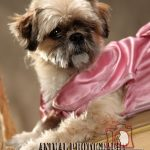 animal 150x150 خدمات عکاسی از حیوانات خانگی