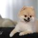 animals3 80x80 خدمات عکاسی از حیوانات خانگی