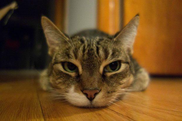 cat 01 فاصله کانونی در لنزها و عکاسی