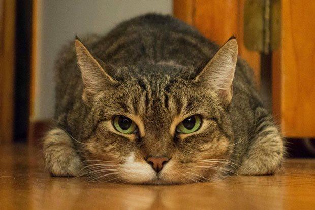 cat 03 فاصله کانونی در لنزها و عکاسی