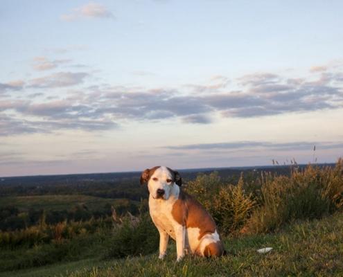 landfill dogs 2 495x400 عکاسی از حیوانات/ سگ های زباله دانی