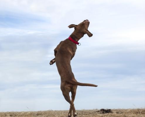 landfill dogs 3 495x400 عکاسی از حیوانات/ سگ های زباله دانی