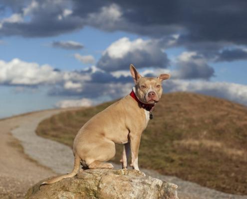 landfill dogs 7 495x400 عکاسی از حیوانات/ سگ های زباله دانی
