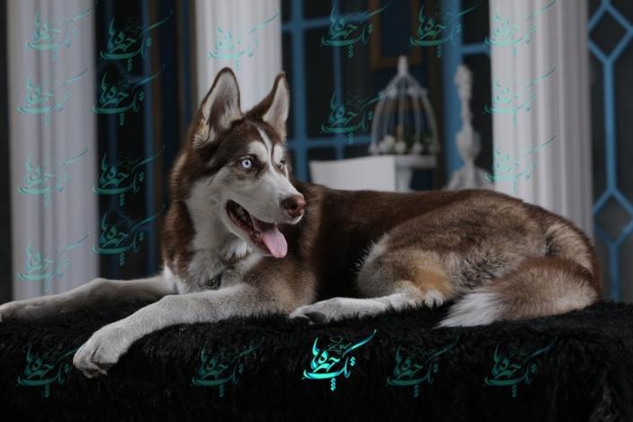 pet photography 6 705x470 خدمات عکاسی از حیوانات خانگی