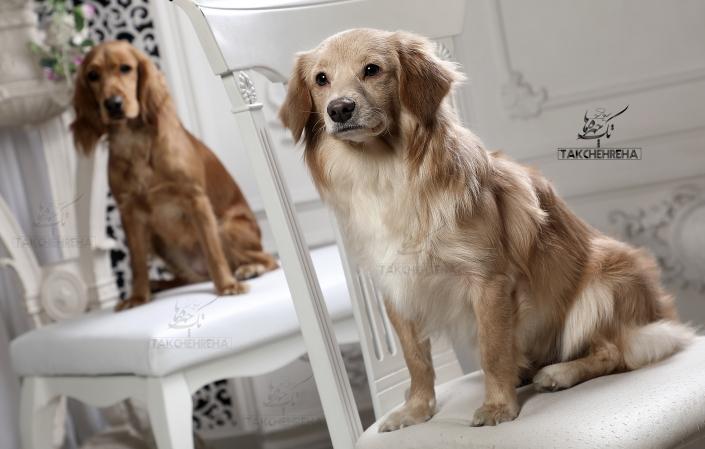 10 705x449 خدمات عکاسی از حیوانات خانگی