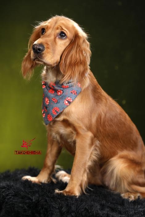 3 470x705 خدمات عکاسی از حیوانات خانگی