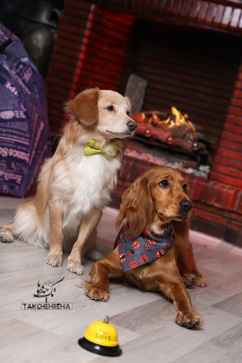 5 470x705 خدمات عکاسی از حیوانات خانگی