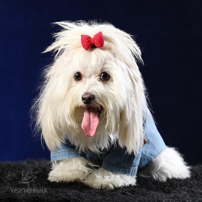 9791 705x705 خدمات عکاسی از حیوانات خانگی