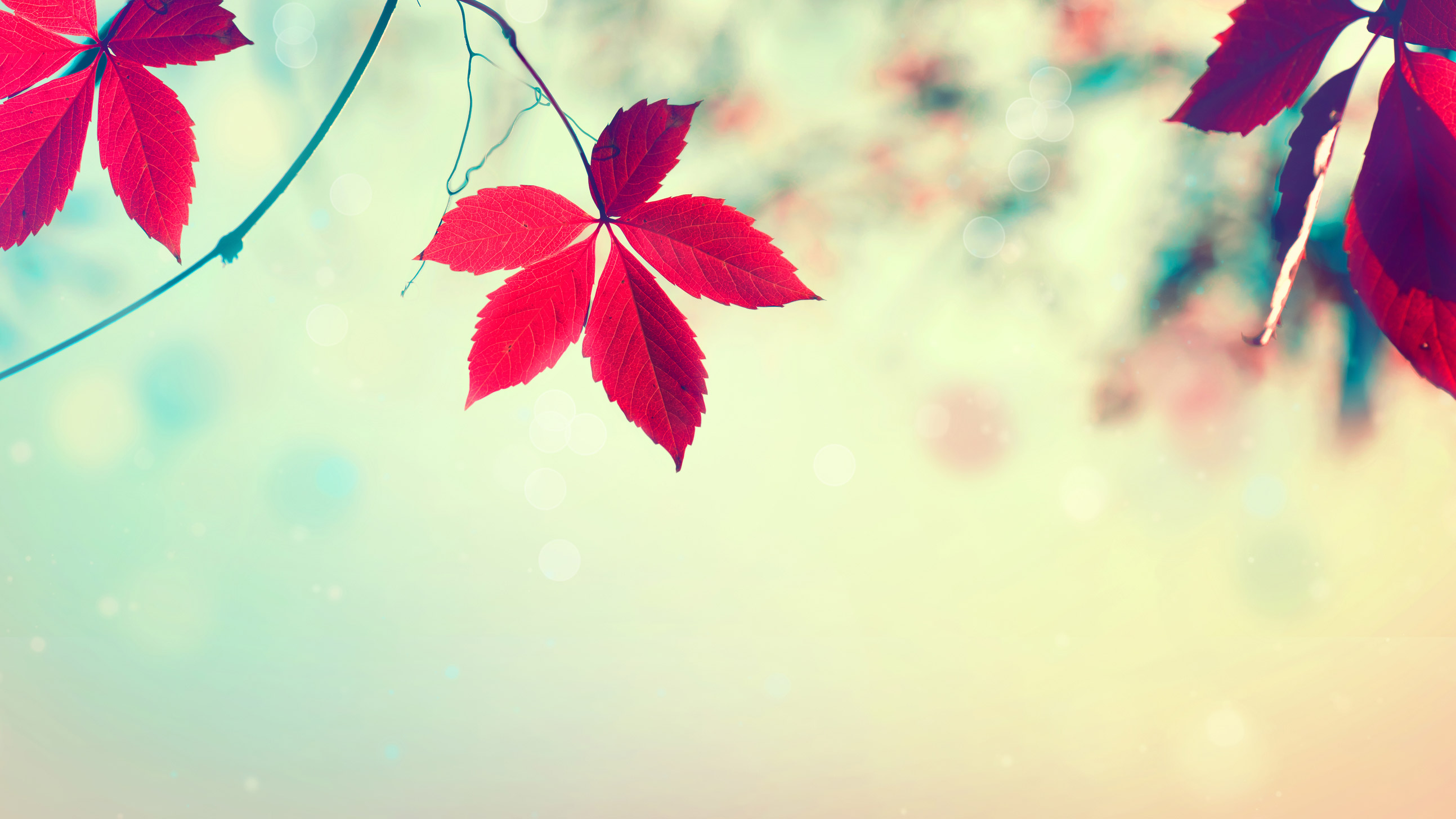autumn bg تک چهره ها
