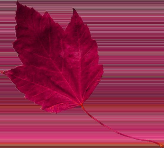 red leaf 1 تک چهره ها