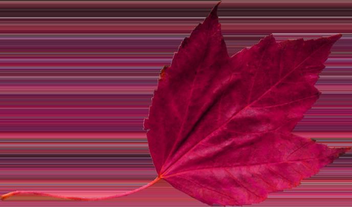 red leaf 2 تک چهره ها