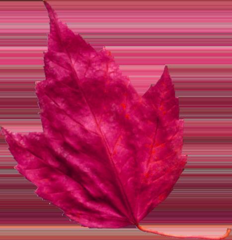 red leaf 3 تک چهره ها