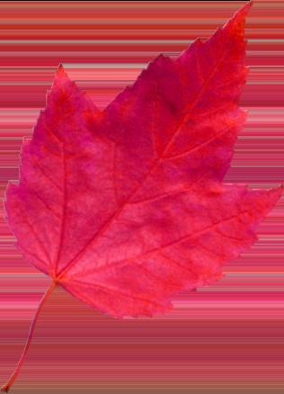 red leaf 4 خانه